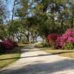 Live Oaks Bicycle Route in Ocean Springs